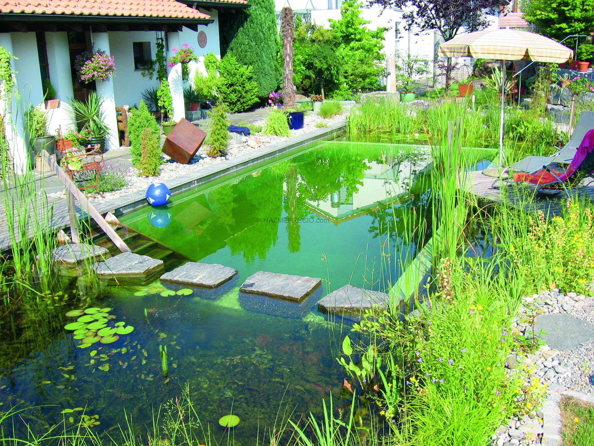 Biopiscinas la alternativa sustentable la red verde for Piscina sustentable